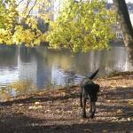 Aykas täglicher Spaziergang am Speegraben mitten in Düsseldorf