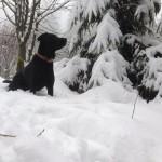 ayka im schnee - winterberg2013