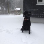 hund-ayka-schnee