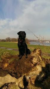 Ayka genießt die Sonne am Rhein