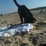 Wo ist die Strandmaus?