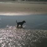 Hund Ayka Meer