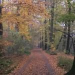 Wald-schloss benrath