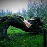 Weide-urdenbacher kämpe