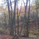 Blick in den Aaper Wald