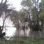 Leichtes Hochwasser am Rhein Düsseldorf Himmelgeist, 16.11.2013