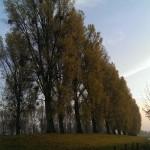 Herbst - einfach schön, 16.11.2013