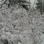 busch-im-schnee