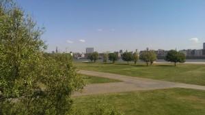 Blick auf die Rheinwiese