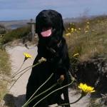 Ayka genießt die Sonne in Kampen