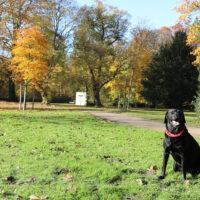 Gassi Gehen mit Hund im Lantz'scher Park