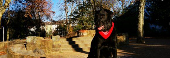Düsseldorf beschnüffelt Haushalte nach Hunden