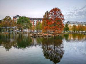 Wasserlandschaft im IHZ Park Düsseldorf