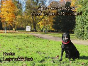 Gassi Gehen im Lantzscher Park