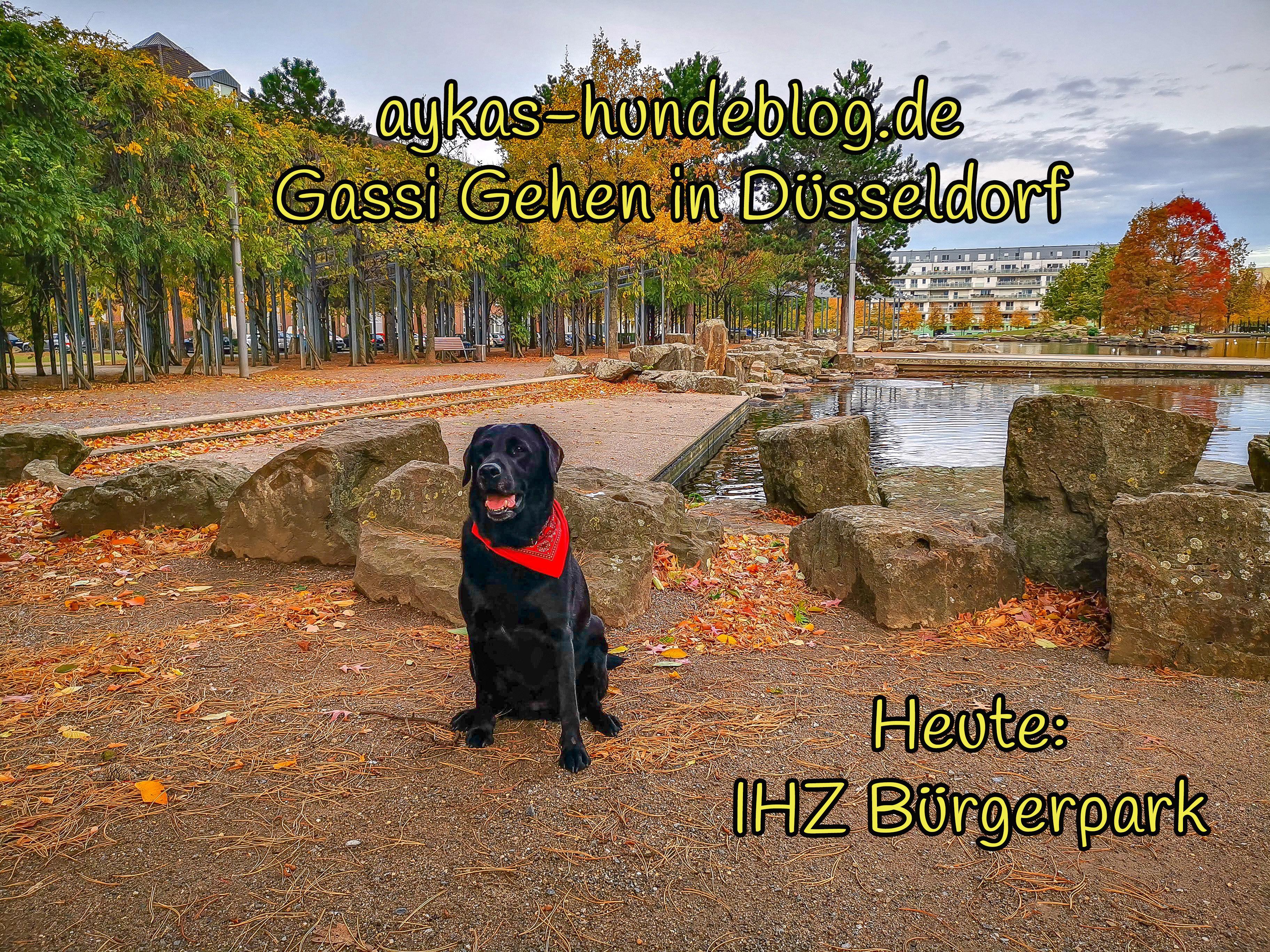 Gassi Gehen IHZ-Bürgerpark Oberbilk
